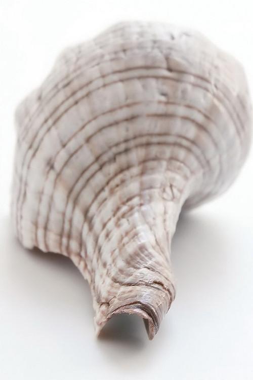 Kunst op glas Shell - Back