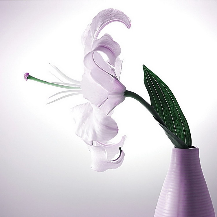 Kunst op glas White Blossom - Flower
