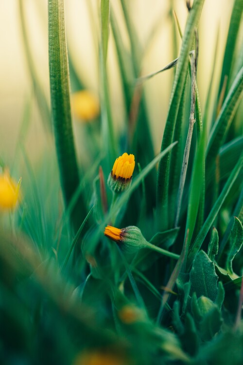 Kunstfotografier Green-flowers-and-plants-from-nature