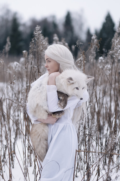 Kunstfotografier Snow fox