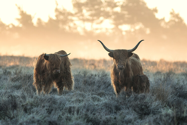 Kunstfotografier Three Highlanders