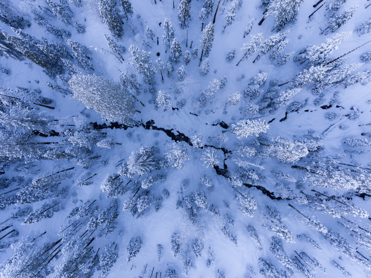 Kunstfotografier Winter wonderland
