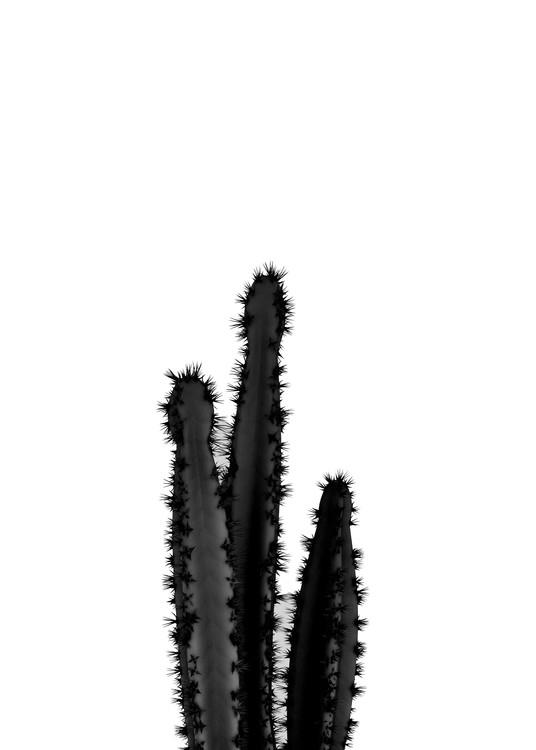 Kunstfotografier BLACK CACTUS 4