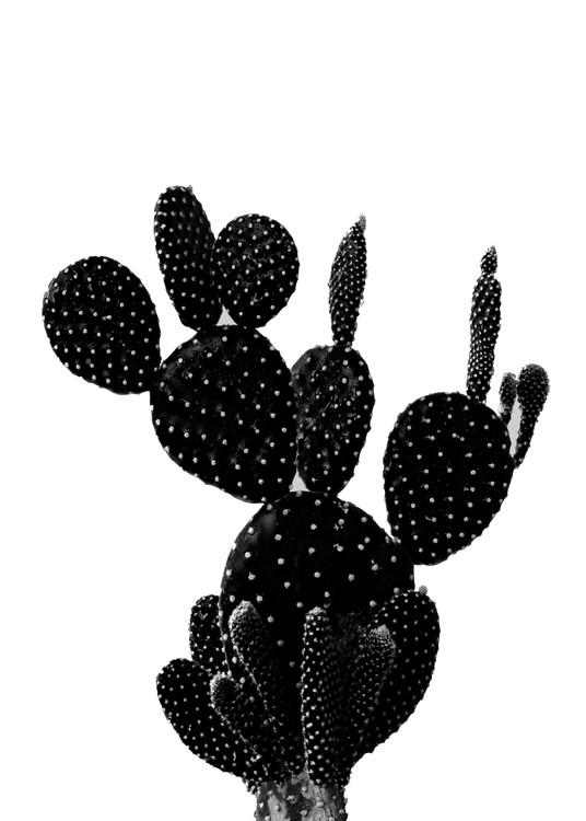 Kunstfotografier BLACKCACTUS1