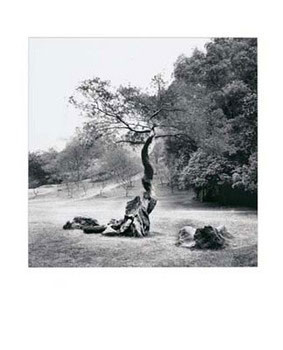 Lonely Tree Festmény reprodukció