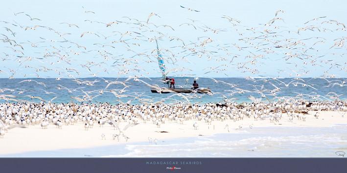 Madagascar seabirds Festmény reprodukció