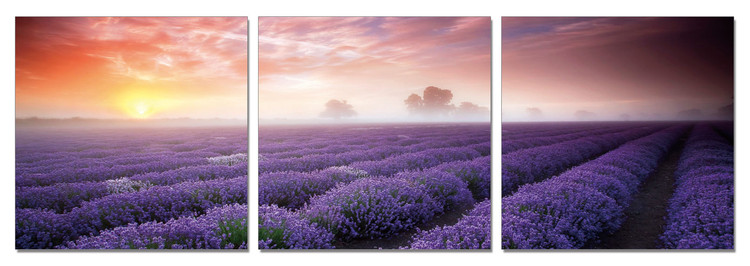 Cuadro  Mist over the Lavender Field