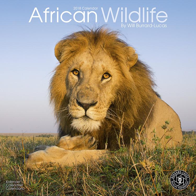 luca naptár 2019 African Wildlife naptár 2019 az Europosters.hu luca naptár 2019