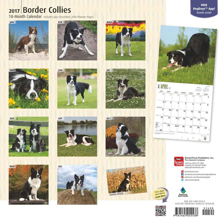 43476cb7b3dc Border collie naptár 2020 az Europosters.hu