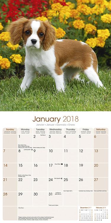c754740171c3 Cavalier King Charles naptár 2020 Cavalier King Charles naptár 2020 ...