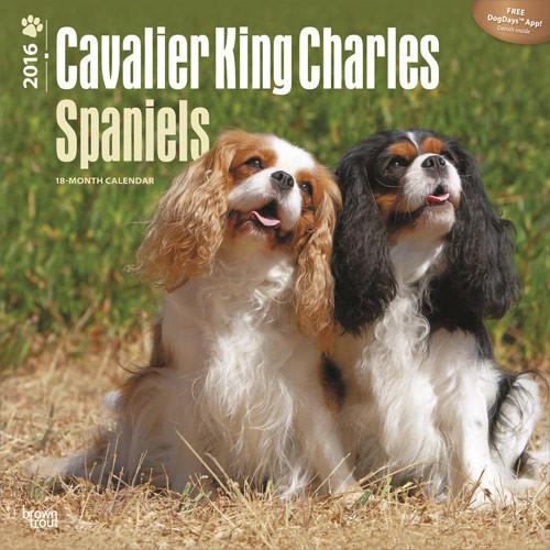 Cavalier King Charles spániel naptár 2017