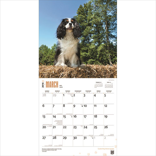 f9d65f930847 Cavalier King Charles spániel naptár 2020 Cavalier King Charles spániel  naptár 2020 ...
