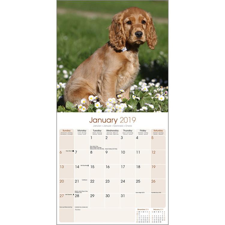652622282699 Cocker Spaniel naptár 2020 Cocker Spaniel naptár 2020 ...