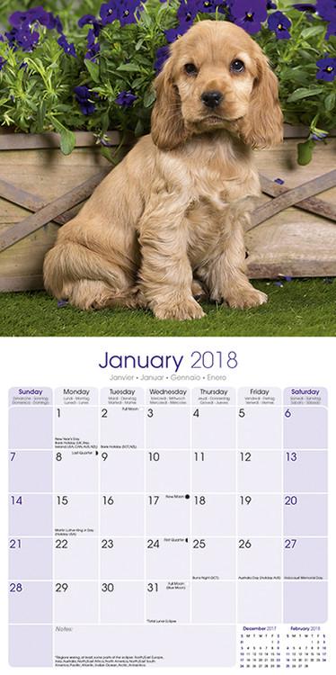 70654fe8ebf5 English Cocker Spaniel naptár 2020 English Cocker Spaniel naptár 2020 ...