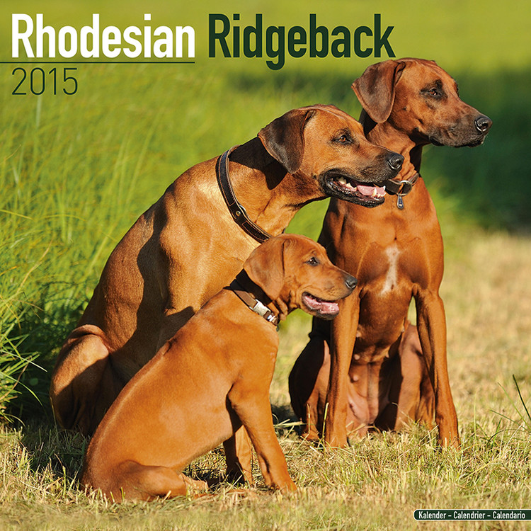 Rhodesian Ridgeback naptár 2017