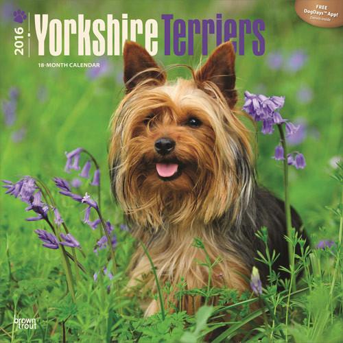 Yorkshire terrier naptár 2017