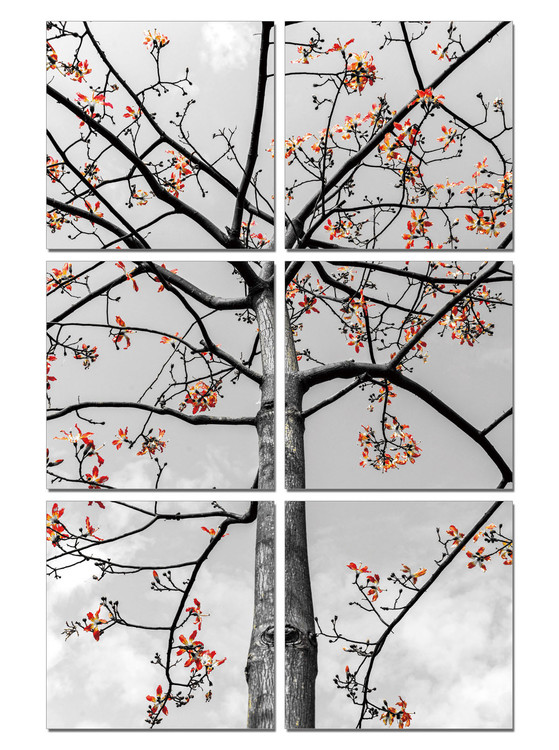 Black and White Tree with Red Leaves Obraz