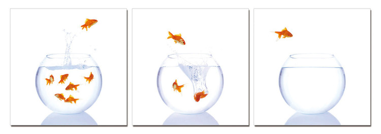 Goldfish in an aquarium Obraz