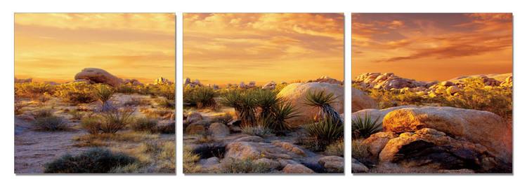Orange Desert Obraz