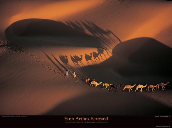 Caravanes de dromadaires  - Mauritanie, Obrazová reprodukcia