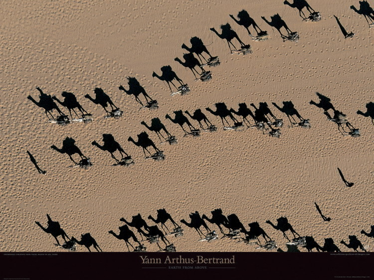 Reprodukce Caravanes de dromadaires - Niger