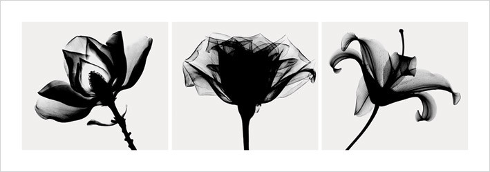 Reprodukce Flowers - b&w