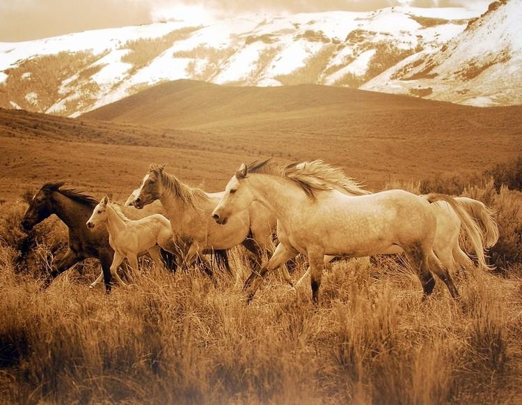 Reprodukce Horses Running I