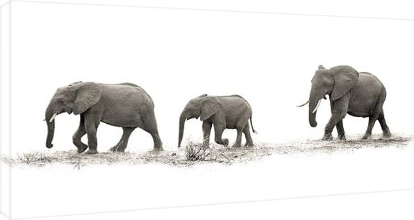 Obraz na plátně Mario Moreno - The Elehants