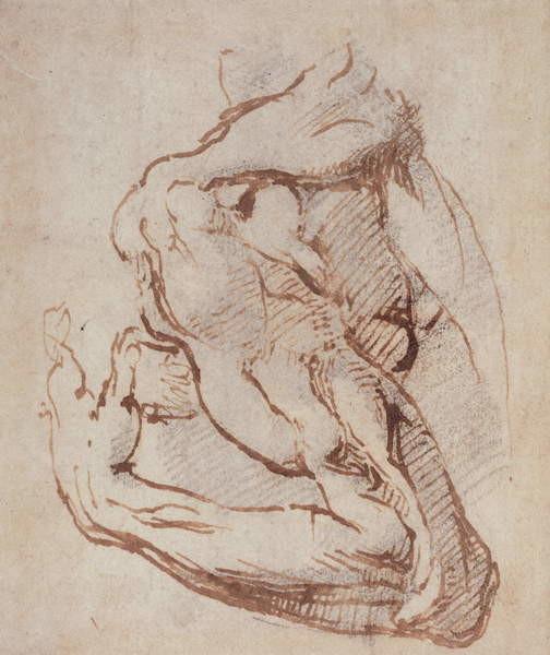 Obraz na plátně Study of an Arm (ink) Inv.1859/5/14/819