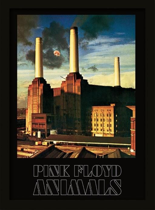 Zarámovaný plagát Pink Floyd - Animals