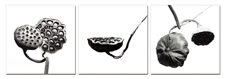 Obraz  Černobílá květina
