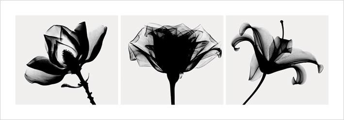 Obrazová reprodukce Flowers - b&w