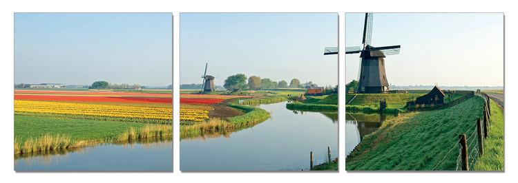 Obraz Holandsko - mlýny s polem tulipánů