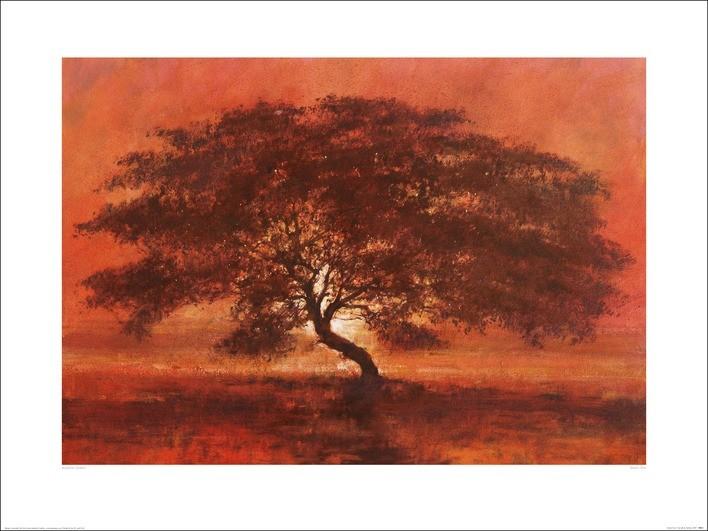 Obrazová reprodukce Jonathan Sanders - Desert Tree