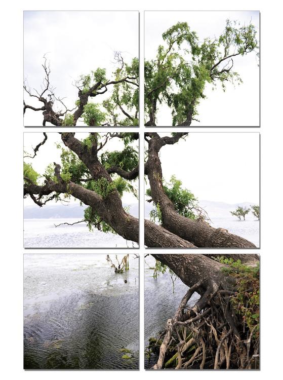 Obraz Klanící se strom