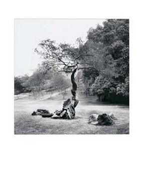 Obrazová reprodukce Lonely Tree