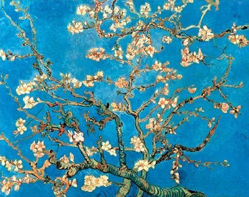 Obrazová reprodukce  Mandlovník - Květoucí větve mandlovníku, 1890