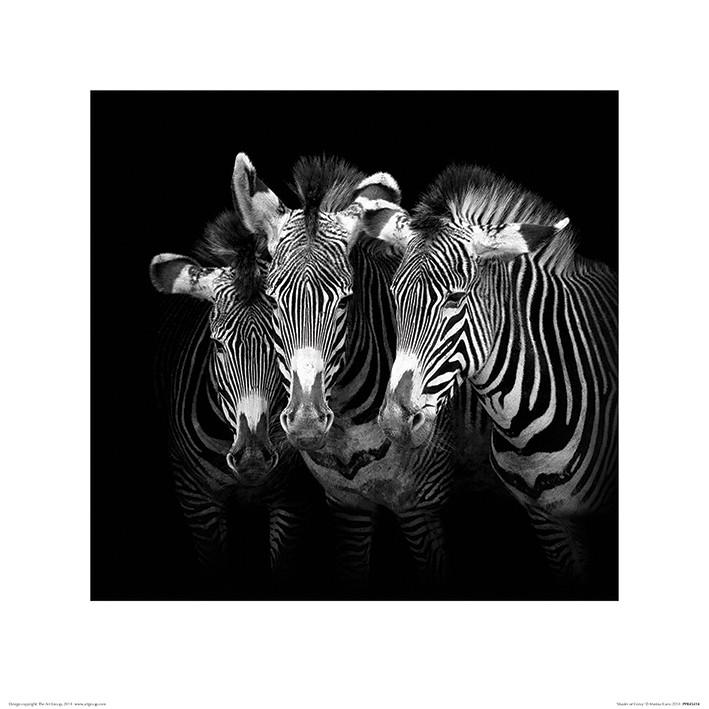 Obrazová reprodukce Marina Cano - Shades of Grevy