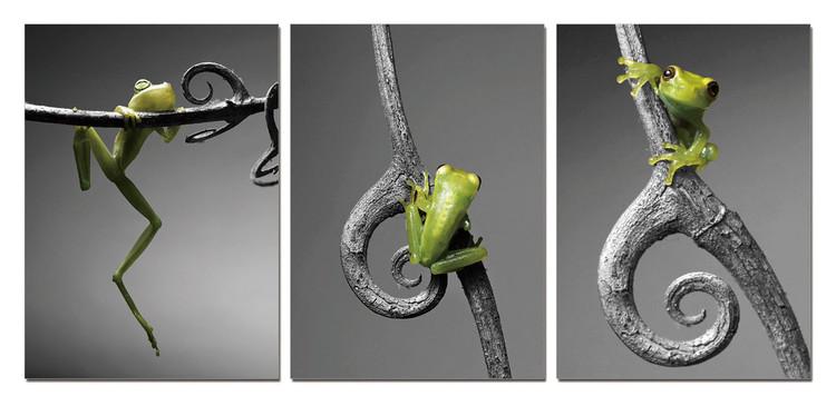Obraz New Model - Frog