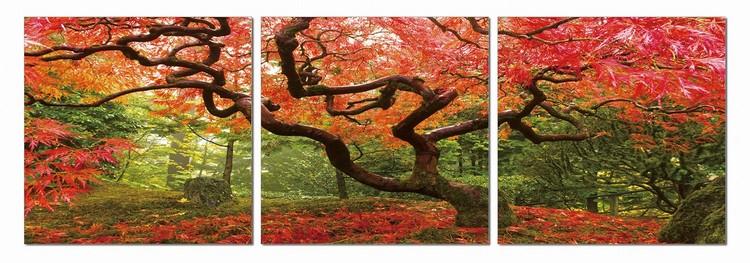 Obraz Pestrobarevný park