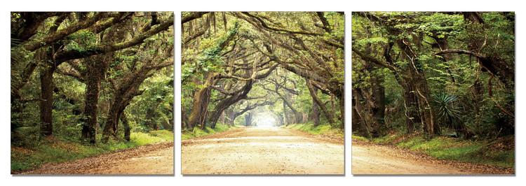 Obraz Stromová alej - čestná brána