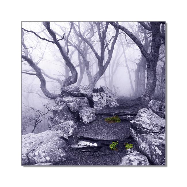 Obraz Svět není černobílý - Apalačská stezka, Virginie