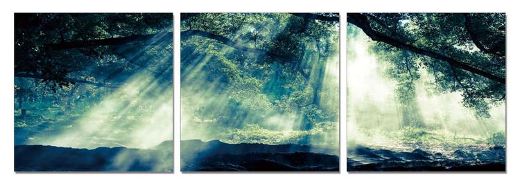 Obraz Zelený les - sluneční paprsky