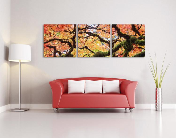 Obraz Pohled na podzimní korunu stromu