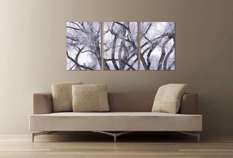 Obraz Zimní koruna stromu