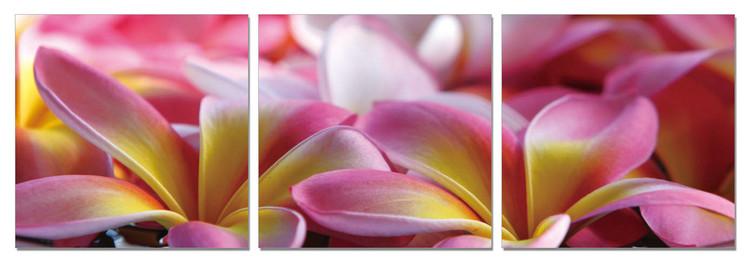 Pink Blossoms Schilderij