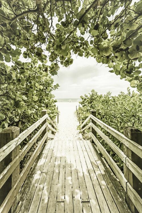 Cuadros en Lienzo Bridge to the beach with mangroves | Vintage