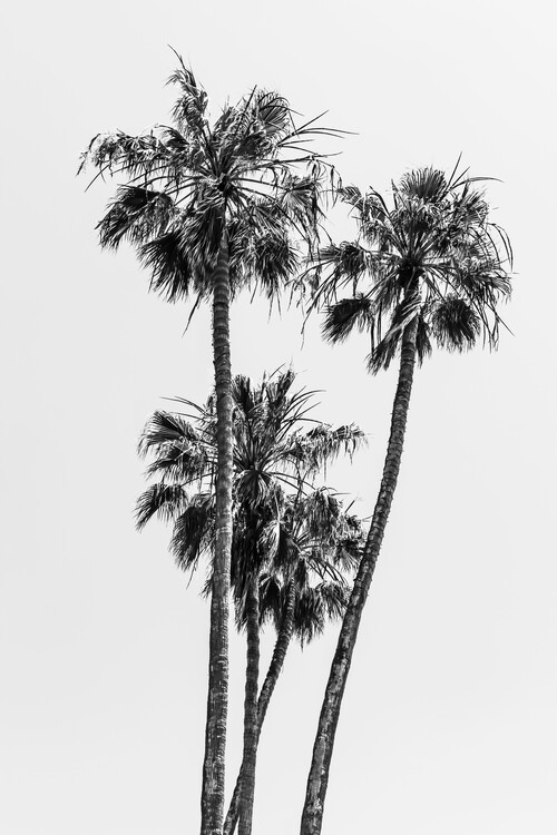 Cuadros en Lienzo Lovely Palm Trees | monochrome