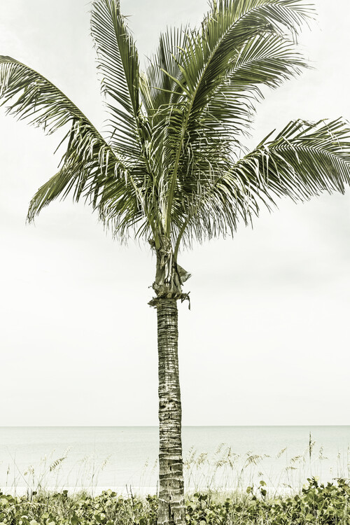 Cuadros en Lienzo Palm Tree at the beach | Vintage