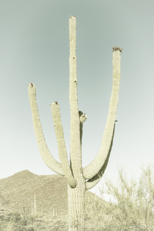 Cuadros en Lienzo SAGUARO NATIONAL PARK Giant Saguaro   Vintage